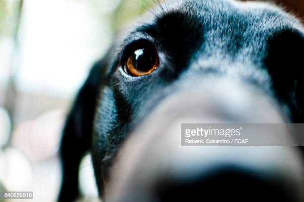 Extreme close-up of black dog