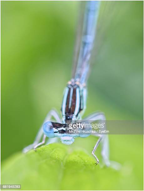 Extreme Close-Up Of Blue Damselfly On Leaf