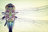 Extreme Close-Up Of Dragon Fly On Table