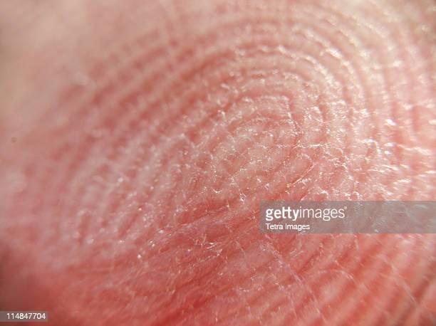 Extreme close-up of fingerprint