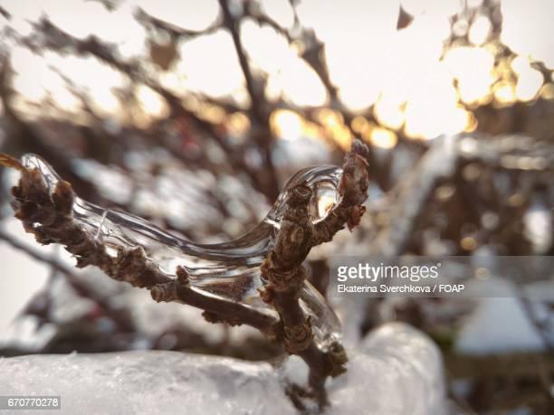 Extreme close-up of melting ice on twig