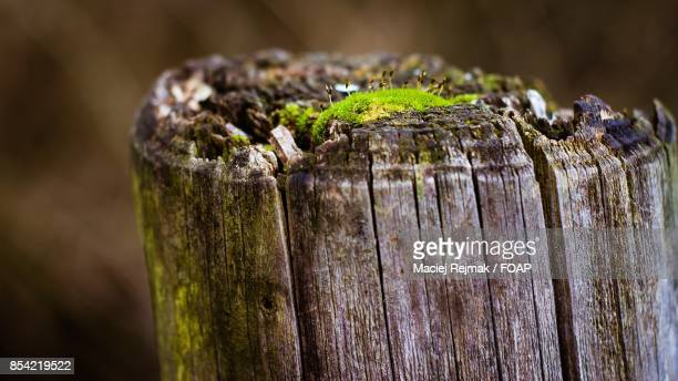 Extreme close-up of tree trunk