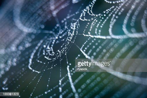Extreme Closeup Spiderweb With Dew