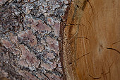 Extreme close-up view of tree bark