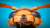 Extreme magnification - Giant Wasp Jaws