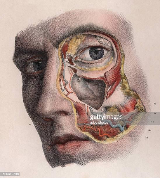 Eye anatomy Plate from the 'Trait�� complet de l'anatomie de l'homme comprenant la m��decine op��ratoire' by JeanBaptiste Marc Bourgery published...