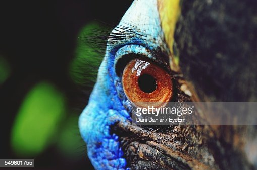 Eye Of Cassowary