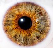 eyeball detail - close up