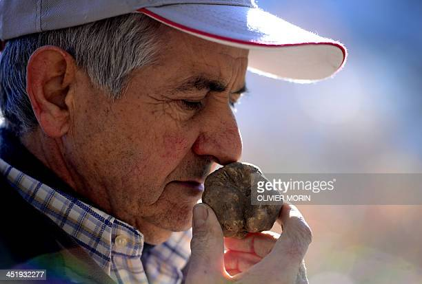 Ezio truffle hunter for 50 years smells a truffle found by his dog Jolli on November 25 2013 in Monchiero's woods near Turin AFP PHOTO / OLIVIER MORIN