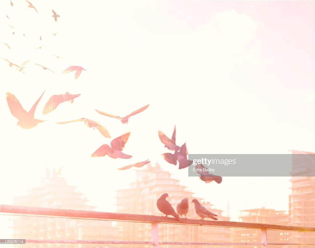 Birds flying over the River Thames : Stock Photo