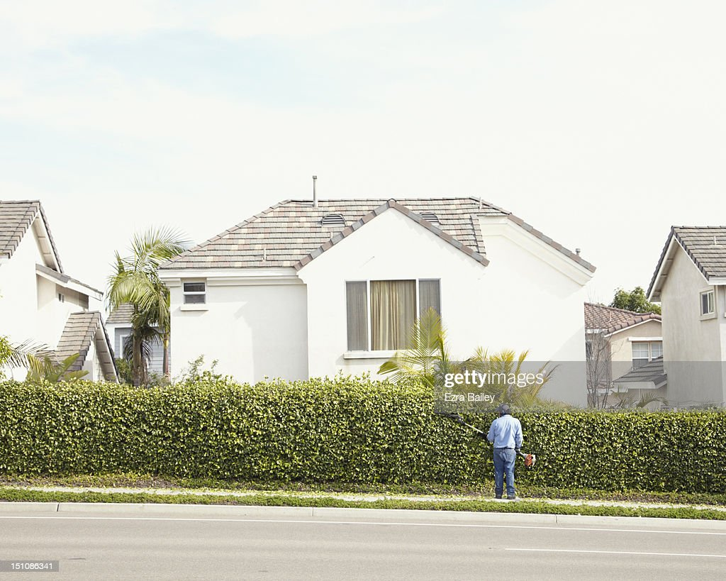 Man trimming hedge in suburbia : Photo