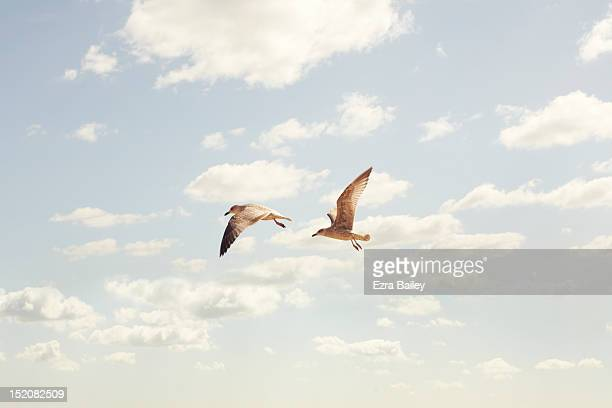 Two Seaguls flying