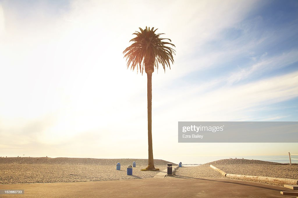 Solitary palm tree against sunset : Stock Photo