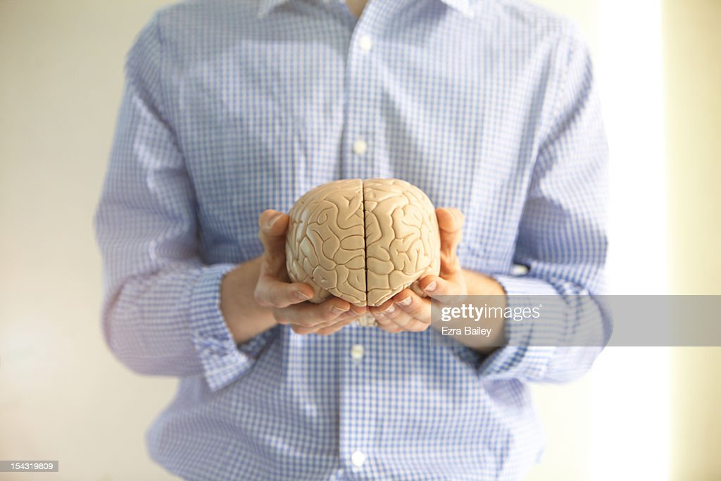 Man holding a model of a brain. : Stock Photo