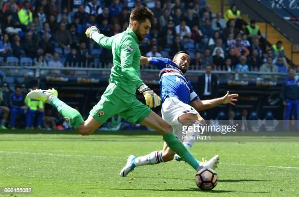 Fabio Quagliarella of Sampdoria and the goalkeeper of Fiorentina Ciprian Tatarusanu during the Serie A match between UC Sampdoria and ACF Fiorentina...