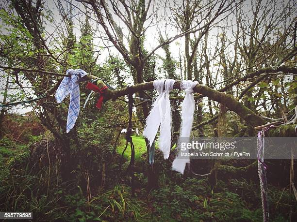 Fabric Tied Up On Tree In Forest