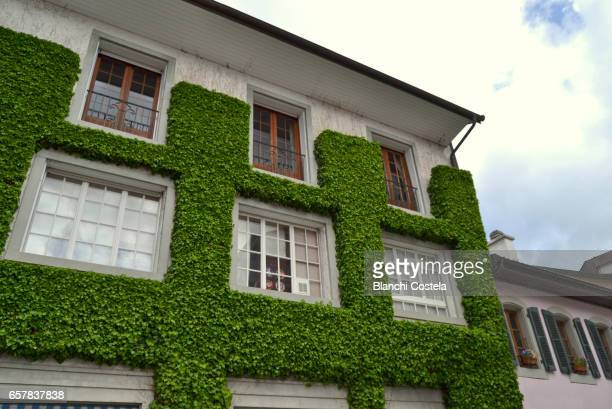Facade of a building covered with ivy