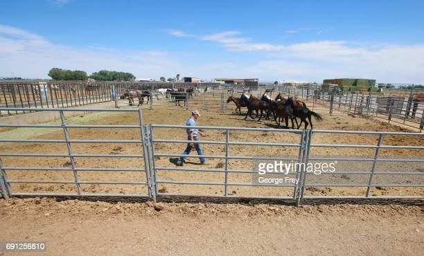 Facility manager Heath Weber walks through corrals of several hundred wild horses at a BLM holding/adoption facility after being rounded up from BLM...