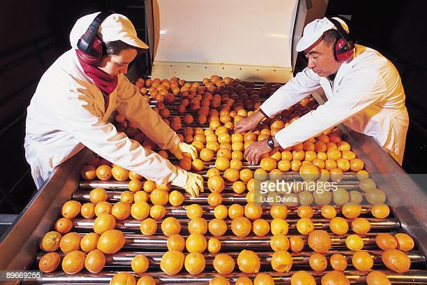 Factory of Juices Don Simon Jumilla Murcia An aspect of the process of production of the orange juice