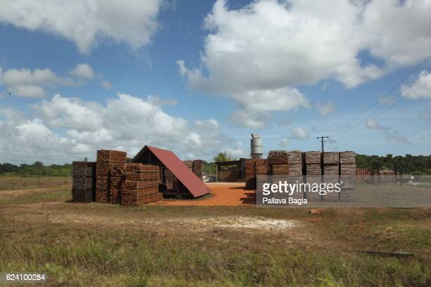 A factory that processes wood harvested from the rain forest French Guiana is haven for plants and animals with ninety percent of the area under...