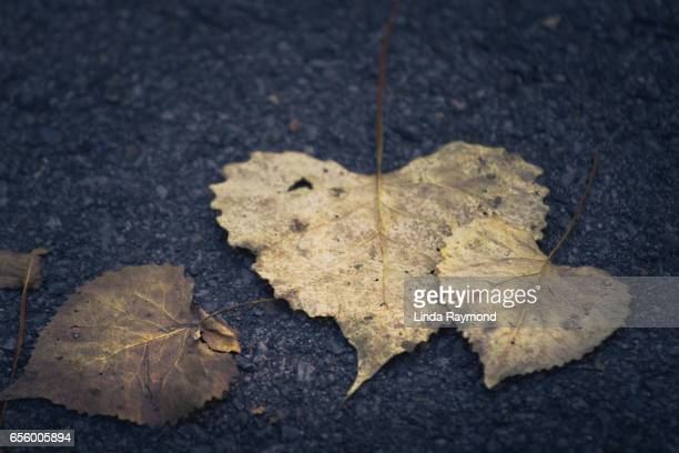 Faded heart-shaped leaves