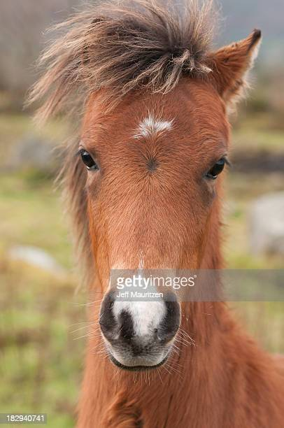 A portrait of a foal.