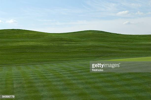 Fairway at Professional Golf Course with Putting Green