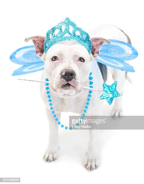 Fairy Princess Dog