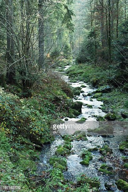 Fiaba foresta