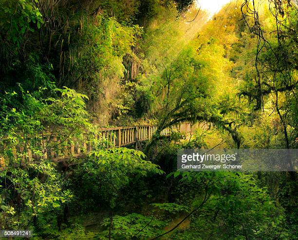 Fairytale forest with a wooden bridge, North Island, New Zealand, composing