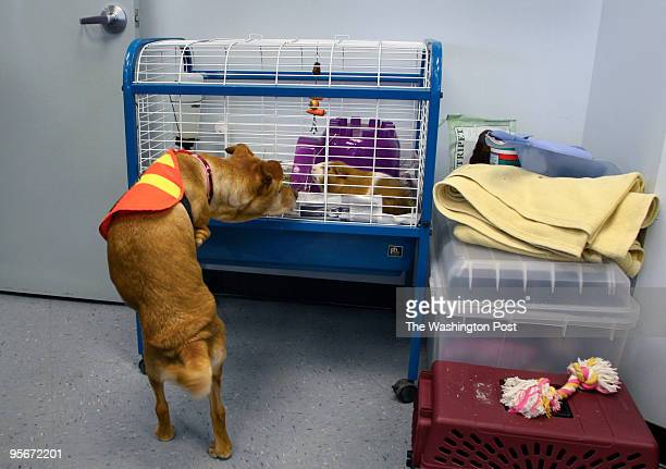 Faith the dog makes appearance at local animal shelter in Manassas and checks out a hamster for adoption Faith was born without front legs and has...