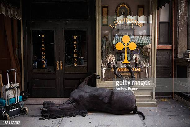 A fake dead horse is seen on set for a television show currently being filmed on November 6 2013 in the Lower East Side neighborhood of the Manhattan...