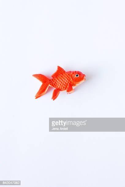 Fake Goldfish on White Background