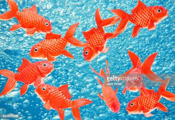 Fake Goldfish
