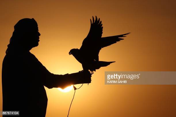 A falcon enthusiast trains a falcon during the 4th International Festival of Falconry in the Ramah Area of alAin on December 7 2017 The festival...