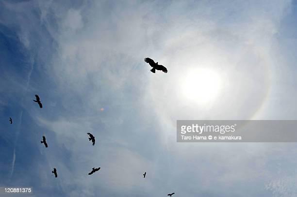 Falcon flying around sun