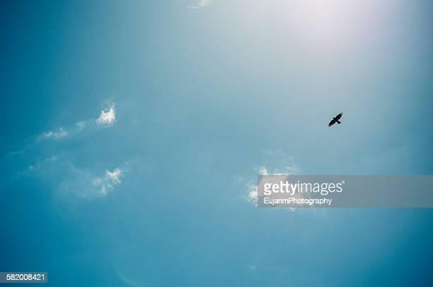 A falcon on blue autumn sky