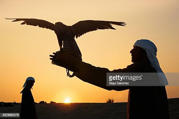 Falconry in the desert of Dubai UAE