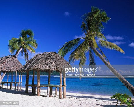 Fales and Palm Trees at Beach