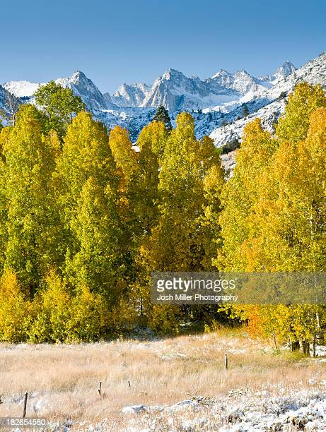 Fall Aspen and first snows of winter below the Sierra crest, Bishop area, California