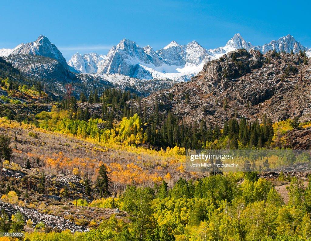 Fall Aspen below the Sierra crest, Bishop area, California