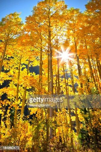 アスペン、コロラドの秋の色