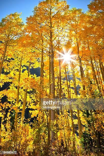 Fall Aspen Color in Colorado