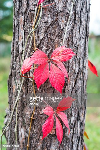 Fall at Monza Park : Stock Photo