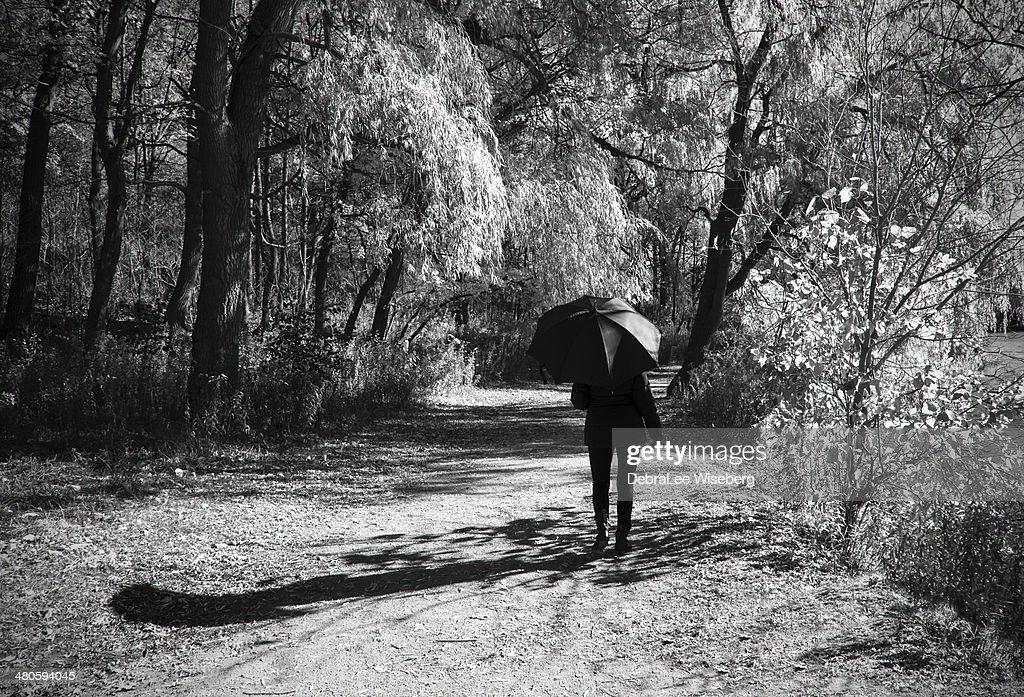 Fall Black Umbrella Series : Stock Photo
