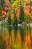 Autumn colors of Yellow orange and still a touch of green reflect in the mountain lake of Bear lake in Colorado