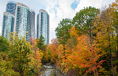 Fall colors in Mississauga