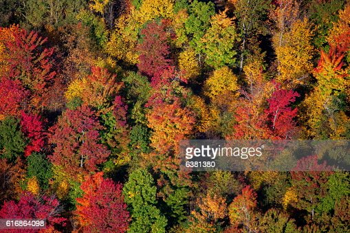 Fall Colors : Stock Photo