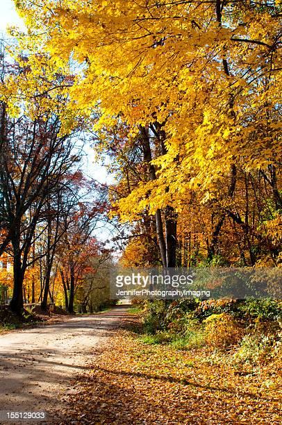 Feuillage d'automne sur un chemin de terre