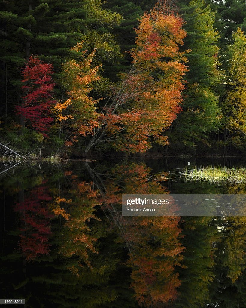 Fall Foliage Reflection, Adirondacks Park New York